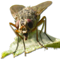 cropped-fly.png